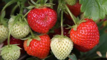 fruit-its-seeds-outside_d049699d1c14afed